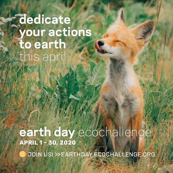 Join our Earth Day Ecochallenge Team April 1-30, 2020 - Green groups in St. Louis are coming together to encourage collective action for a greener, more resilient community. Join us!